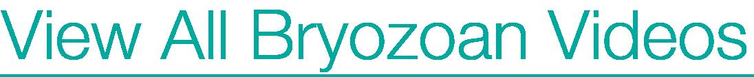 view all bryozoan